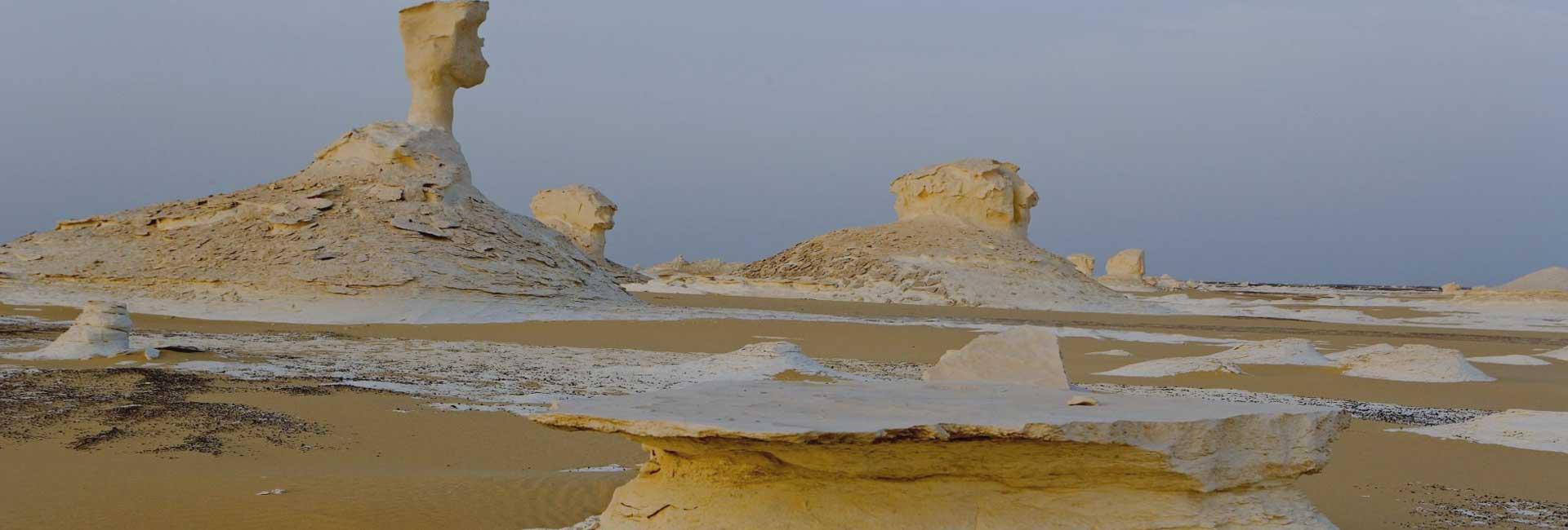 Farfara Oasis