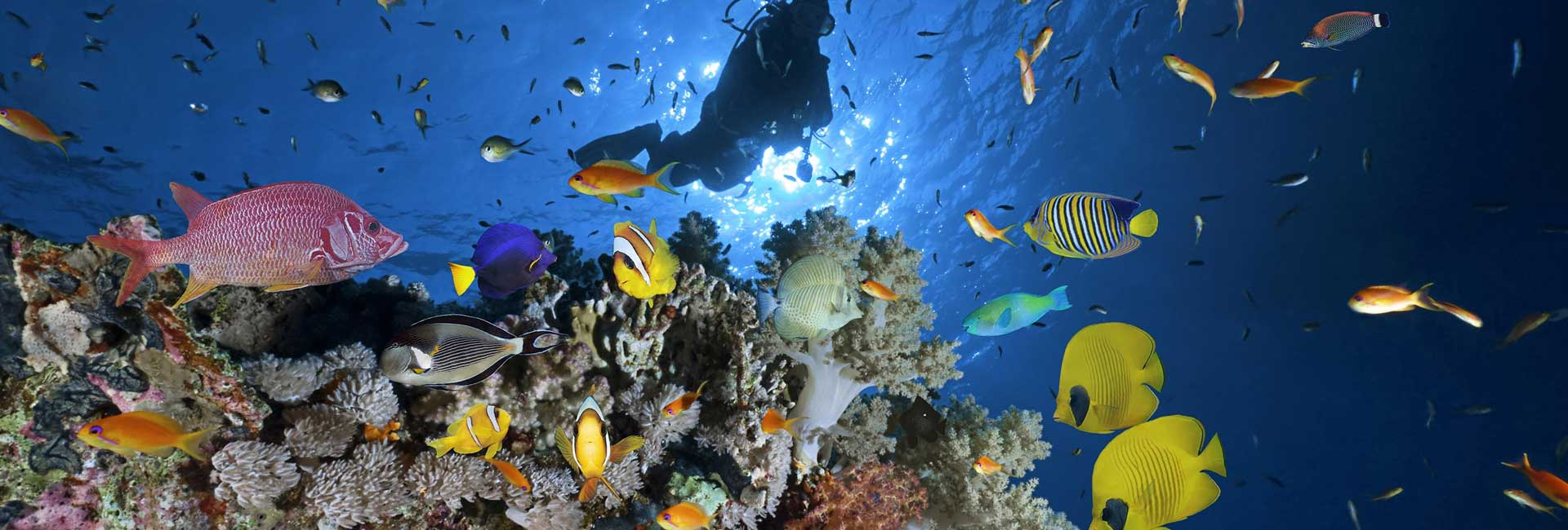 Diving Holidays In Egypt