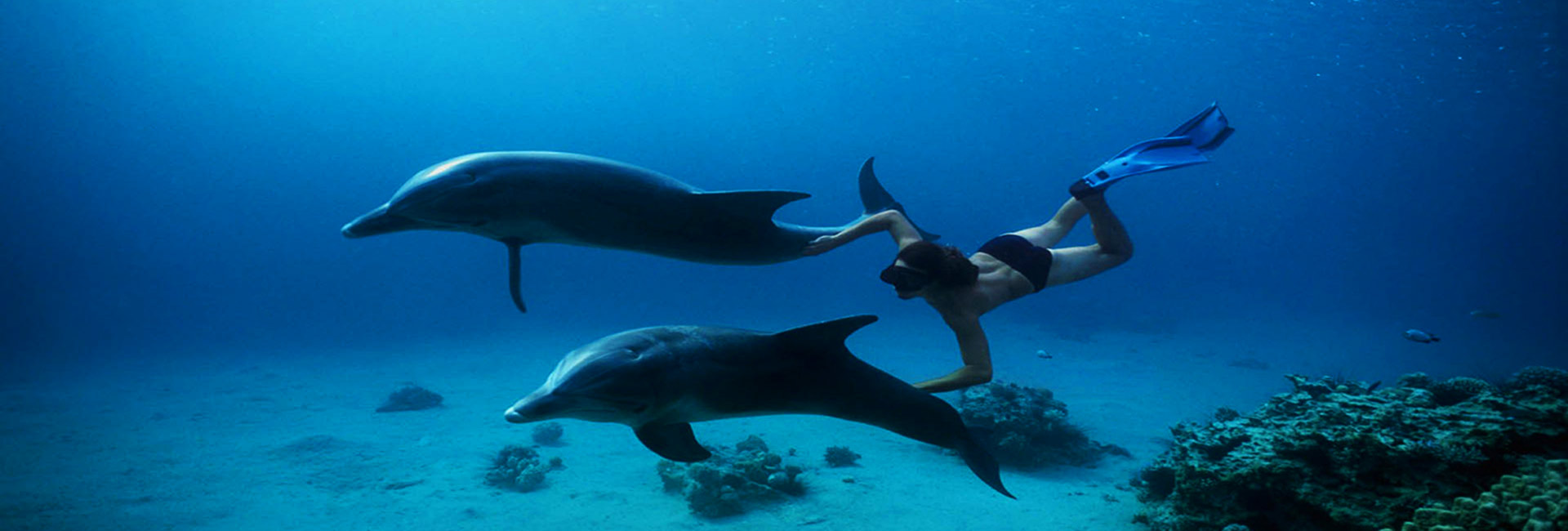 Dolphin House Snorkeling Trip In Hurghada