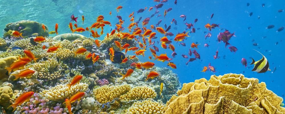 Scuba Diving Tour in Hurghada